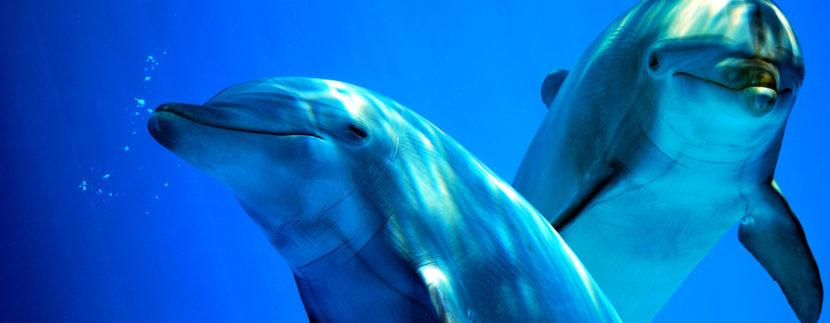 Delfini all'acquario di Cattolica