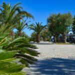 San Benedetto del Tronto - palme sulla passeggiata del lungomare