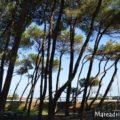 albaadriatica-Alba-Adriatica-pineta-sul-mare